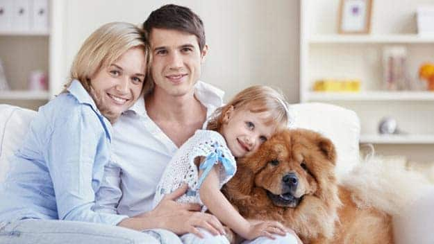 Wills & Trusts dog-young-family Direct Wills Staffordshire